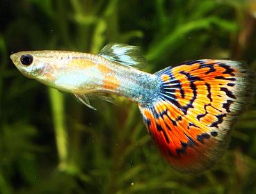 Скачать Бесплатно Аквариумные Рыбки - фото 3